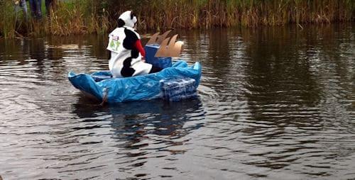 Kuh im Teich mit selbstgebastelten Boot aus Pappe