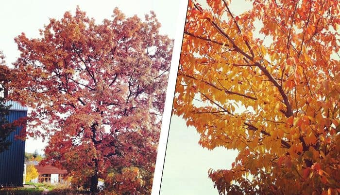 Herbst am UCB