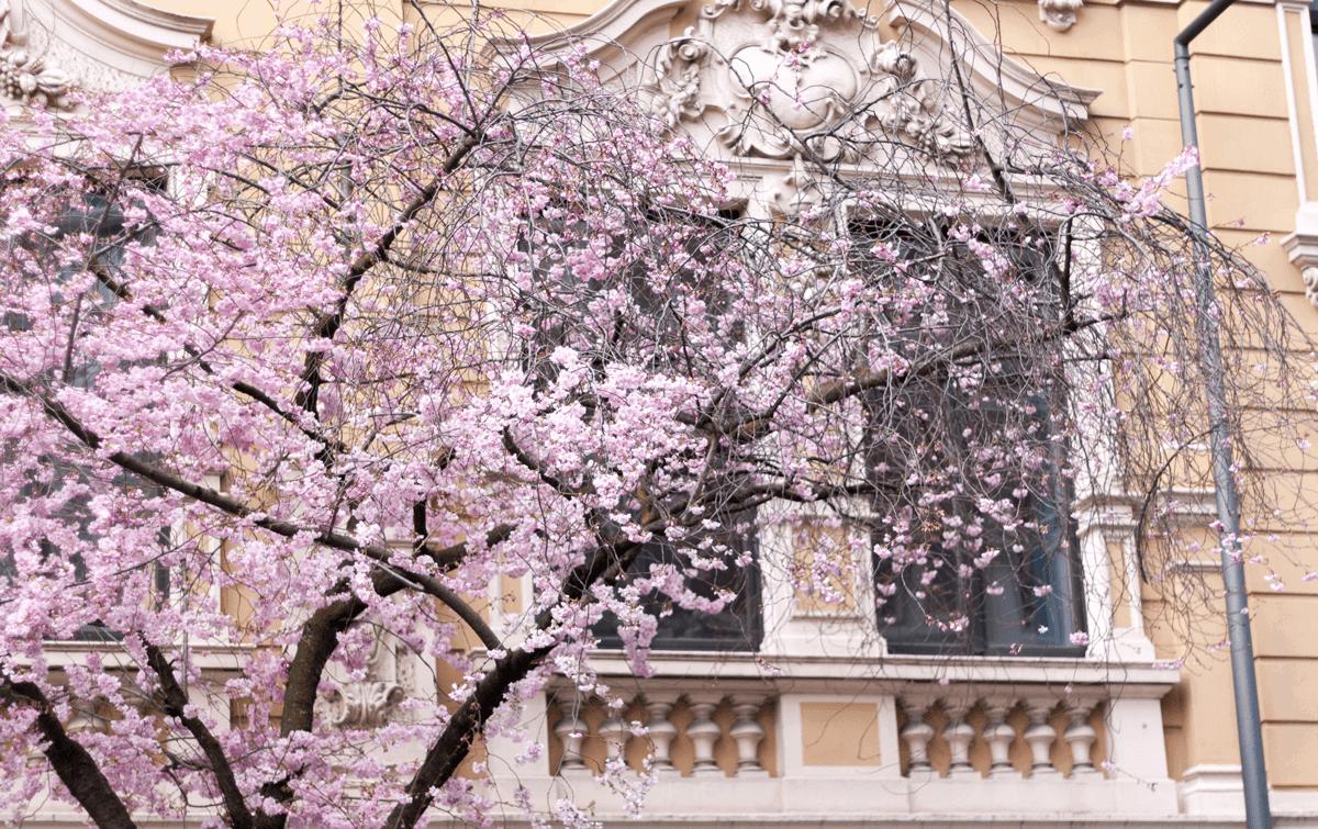 Frühling in Aachen