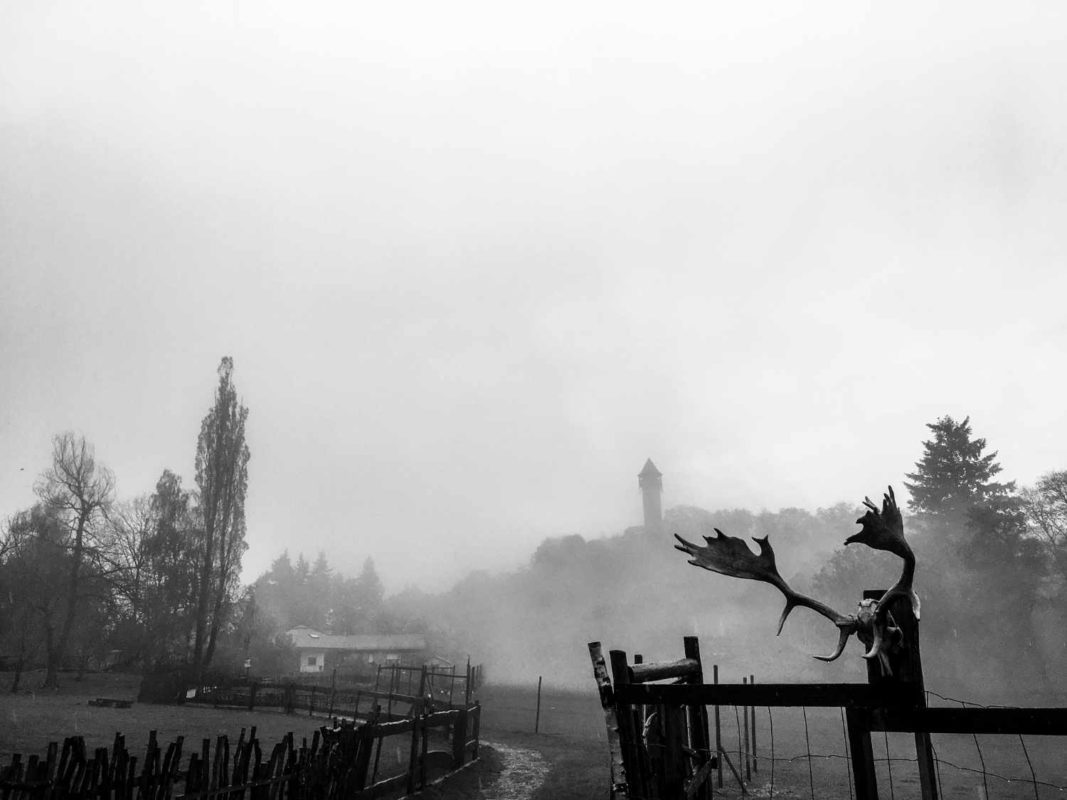 Blick auf die Burg Wildenburg