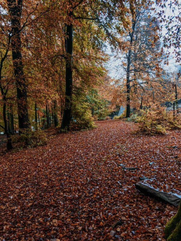 Herbstlaub im Wildfreigehege Wildenburg