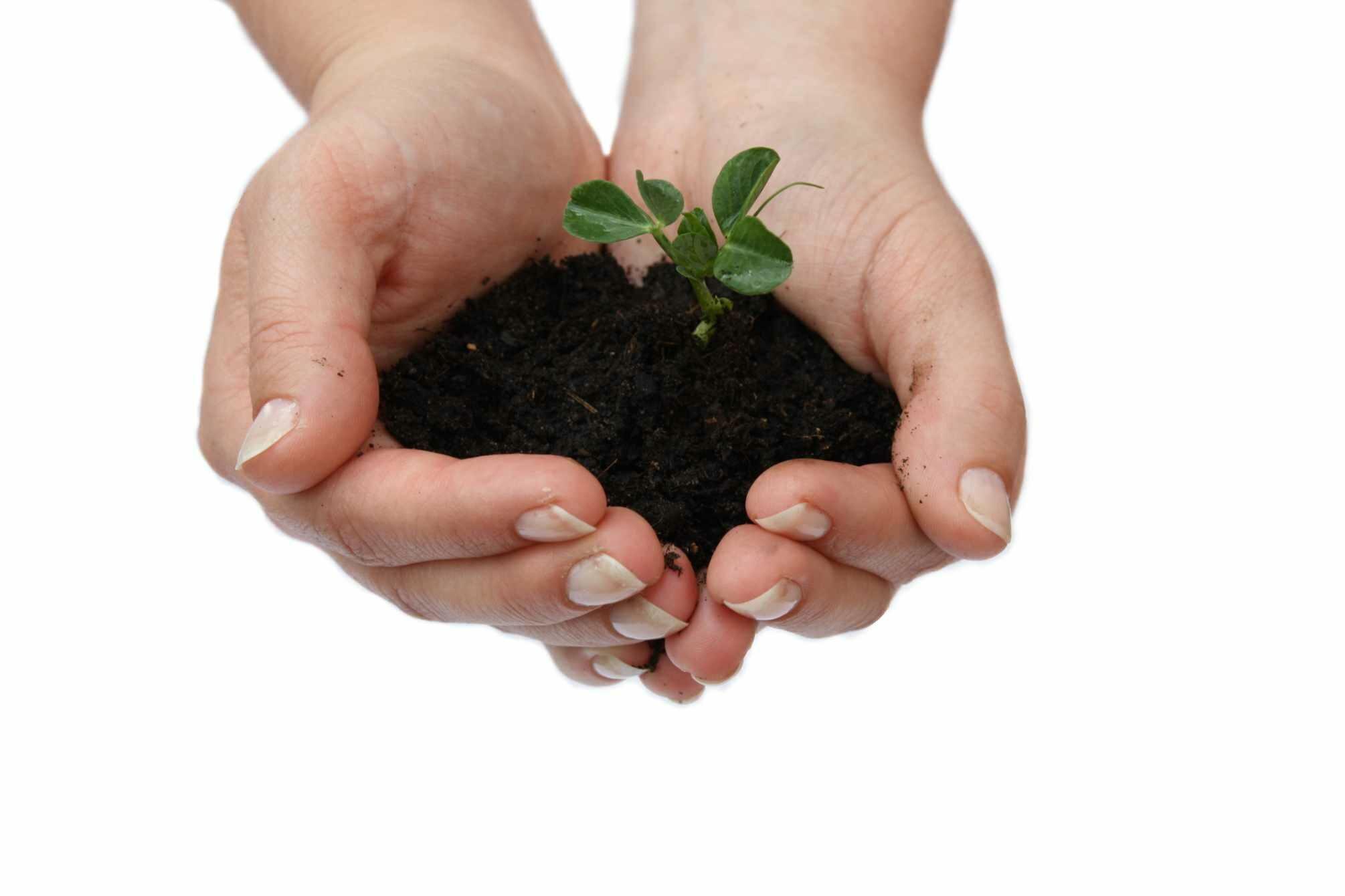 Blumenerde mit einer kleinen Pflanze in den Händen
