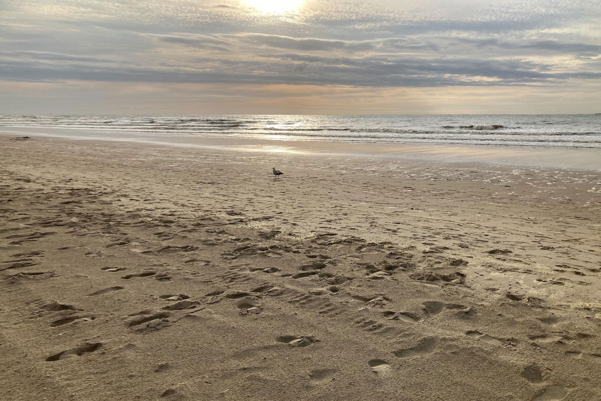 Blankenberge Strand in Belgien Sonnenuntergang